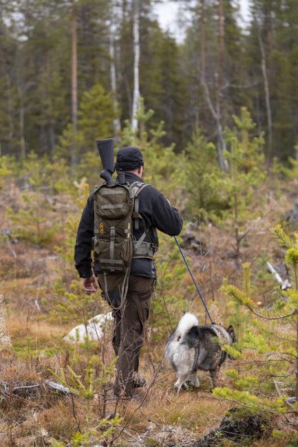 Jägare och hund spårar älg under älgjakt